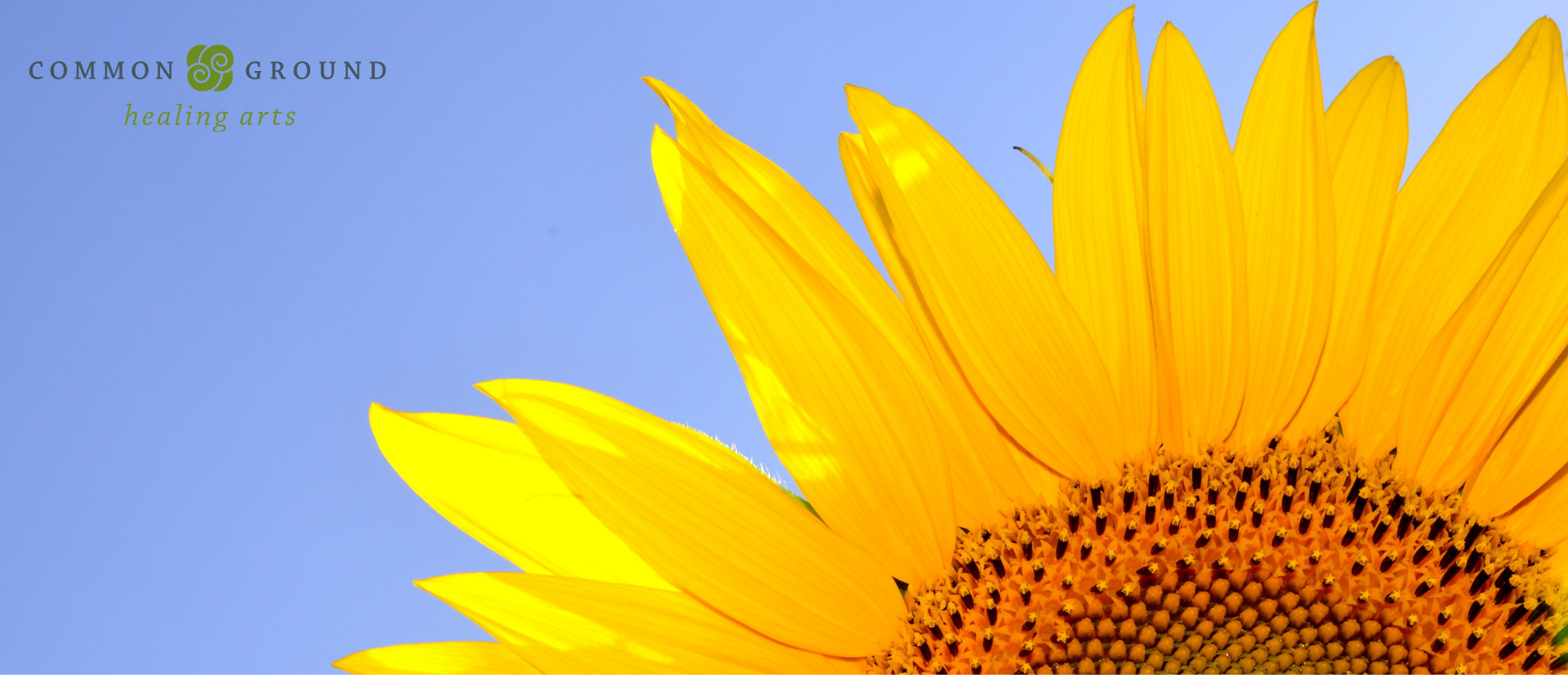 sunflower summer yoga class series